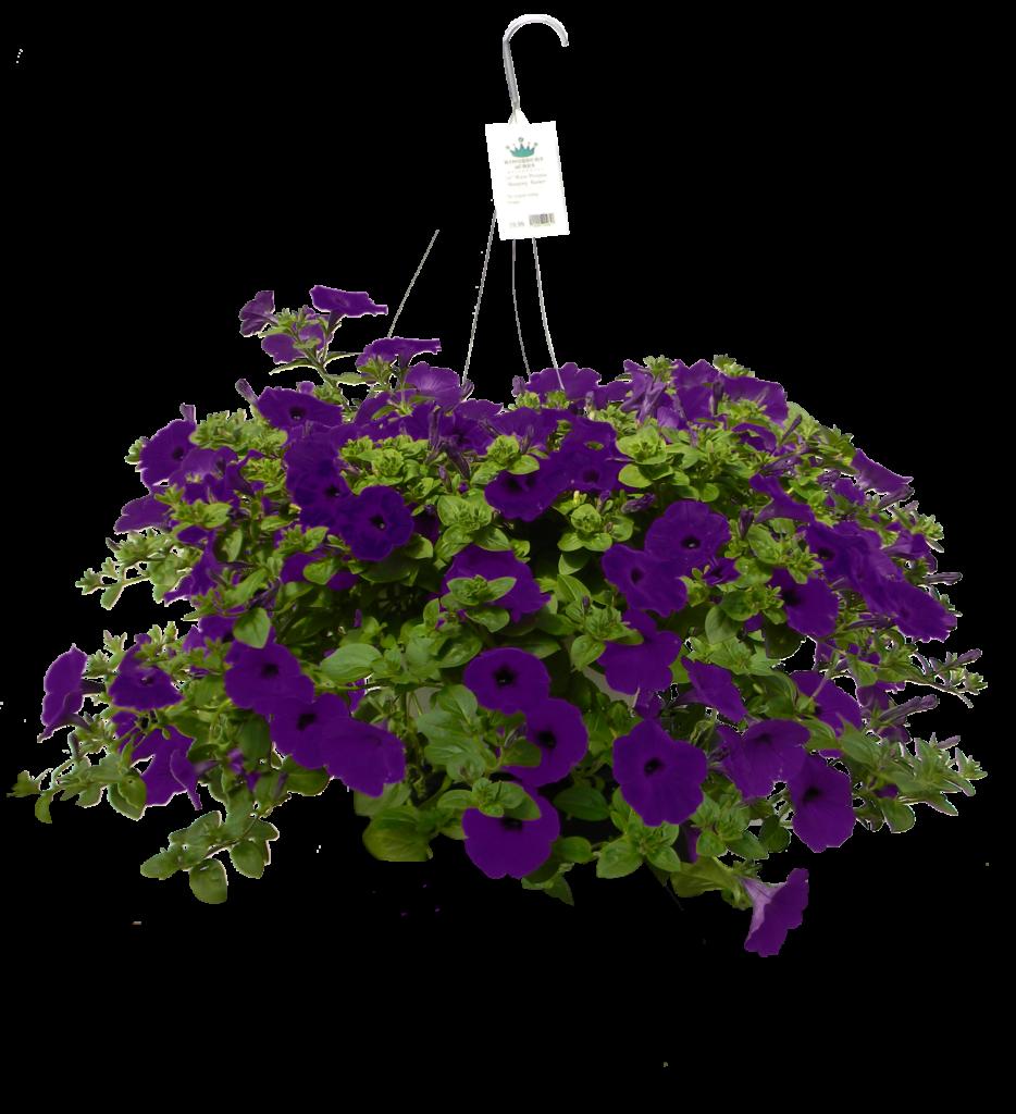 Petunia Wave Petunia Blue 10 75 Hanging Basket Blooms