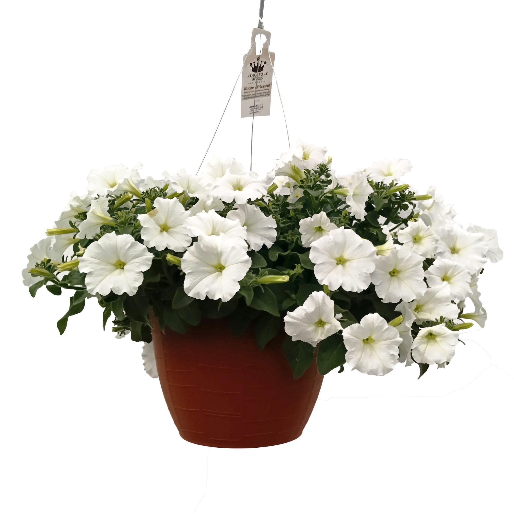 Petunia Wave Petunia White 10 75 Hanging Basket Blooms