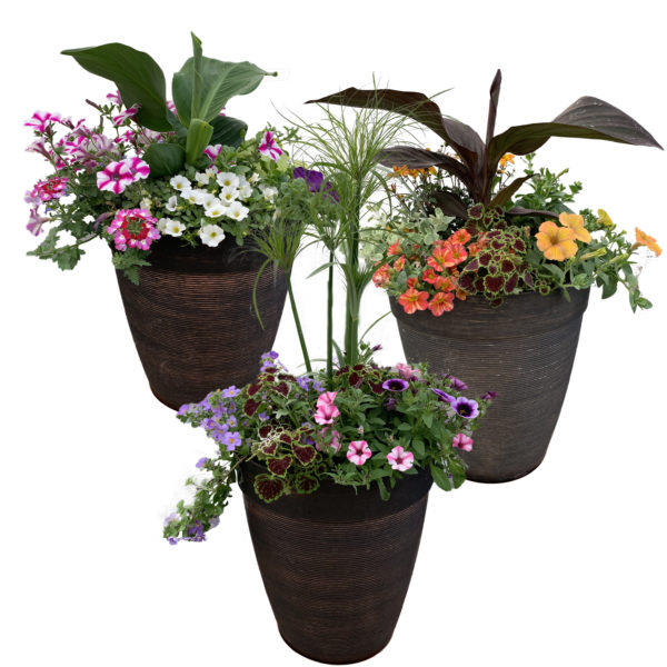 12 in Helix Tall Combination Planter