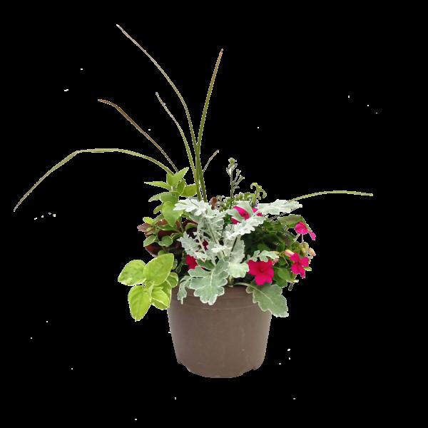 8 in Bella Spike Combination Planter