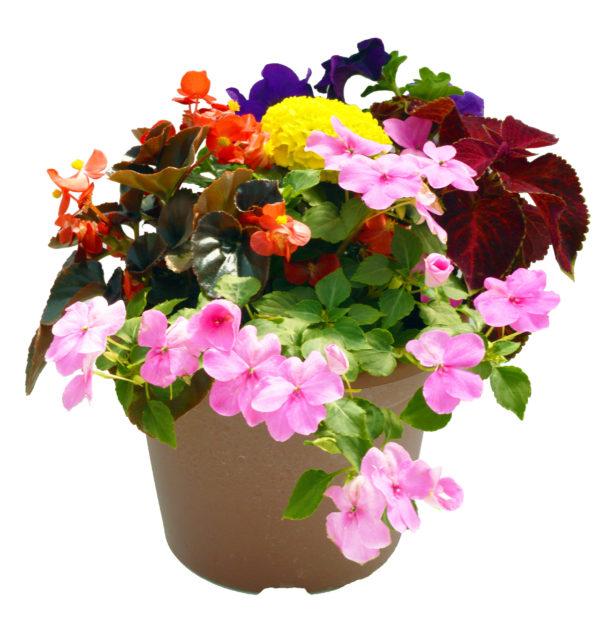 Bella Annual Planter