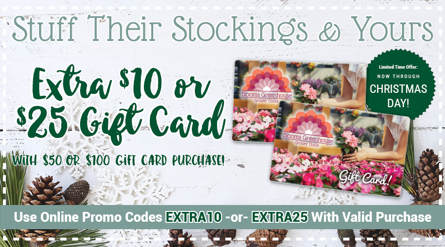 2019 Holiday Gift Card Special