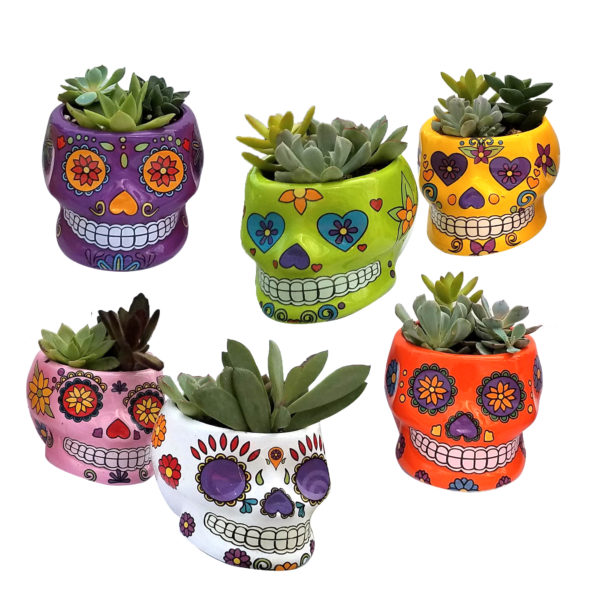 Assorted Sugar Skull Succulent Planter